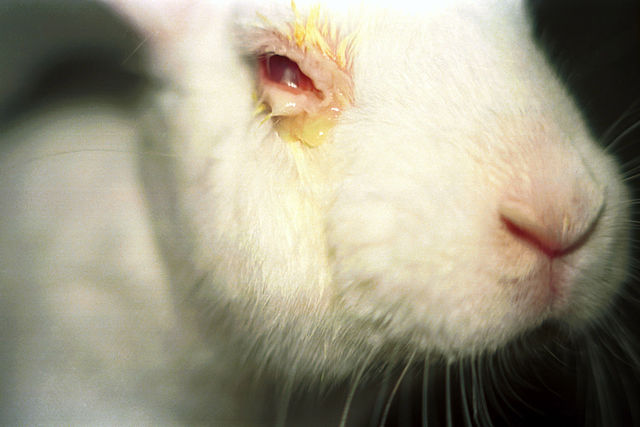 animal testing DraizeTest-PETA.jpg